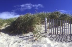 cape-cod-dune